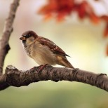 A sparrow resting on a tree branch
